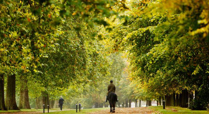 Der Hyde Park in London: Erst spazieren, dann beim Inder schlemmen