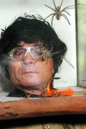 Costa Cordalis und die Spinnen: Tiere in ihrer Würde verletzt