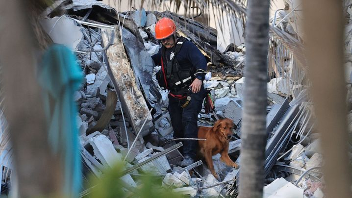 Neben Feuerwehrleuten suchen auch Spürhunde nach Vermissten