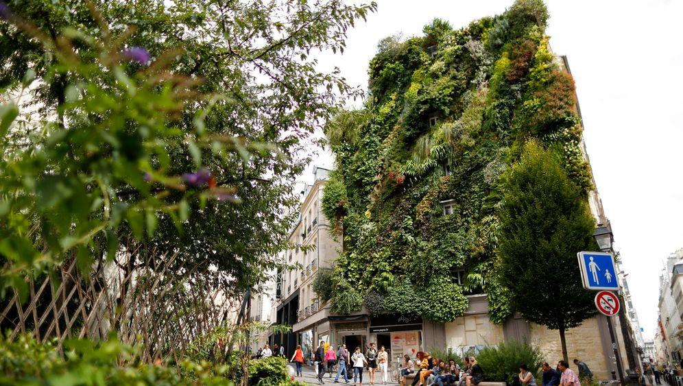 Grüner Wohnen: Großstadtdschungel
