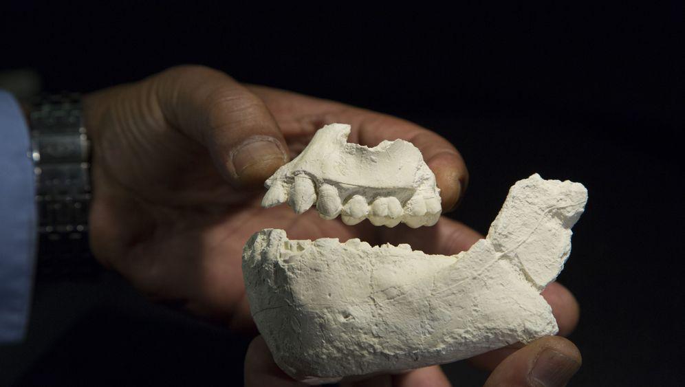 Australopithecus deyiremeda: Der menschliche Stammbaum hat Zuwachs
