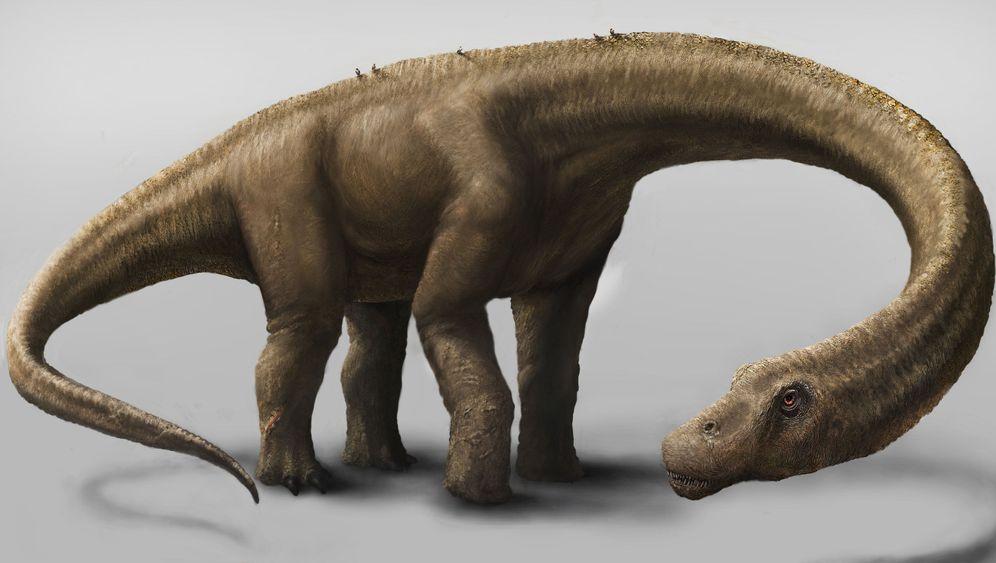 Sauropoden-Fund: Dreadnoughtus, der Titan
