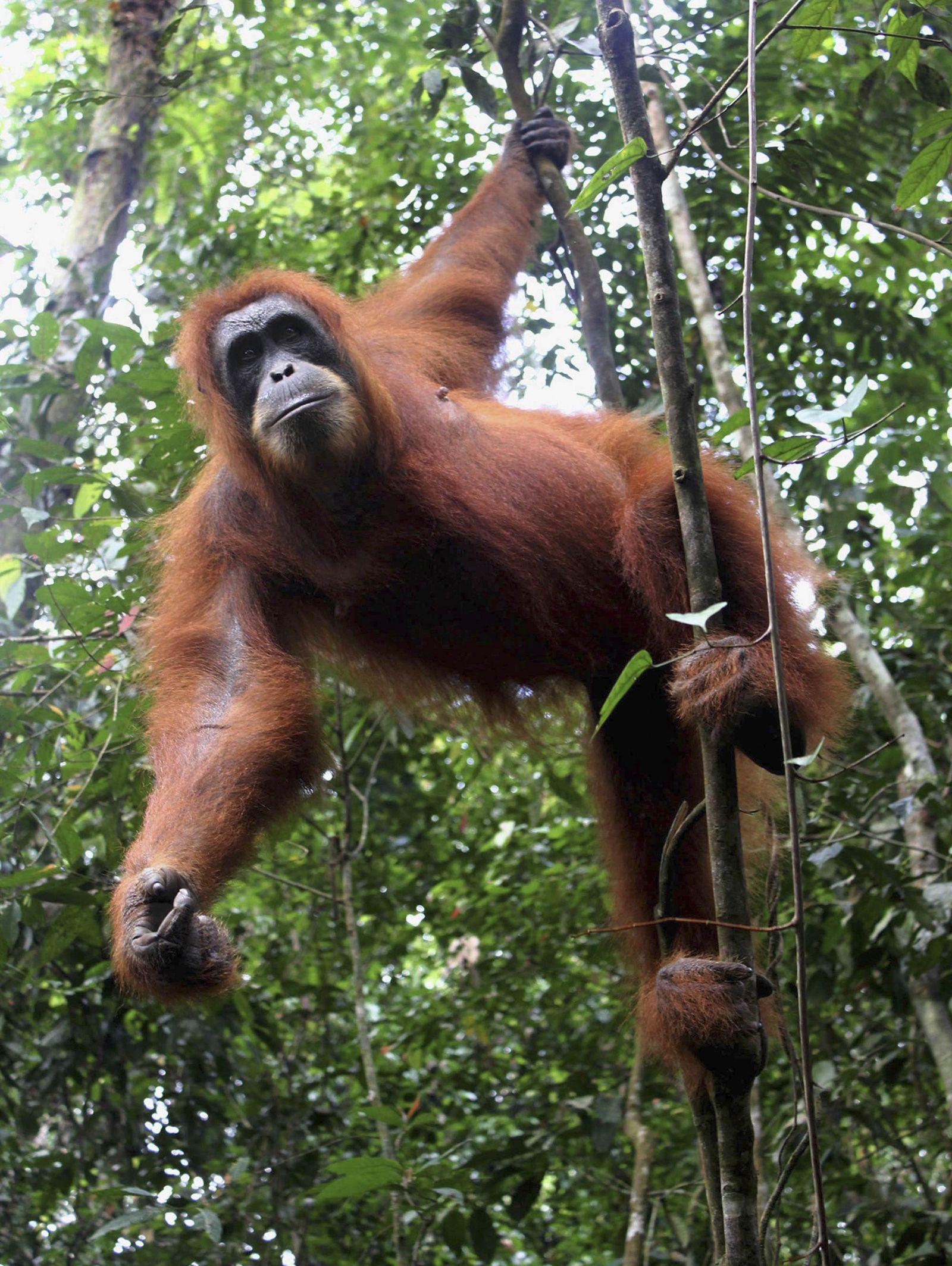 Indonesien / Sumpfwald