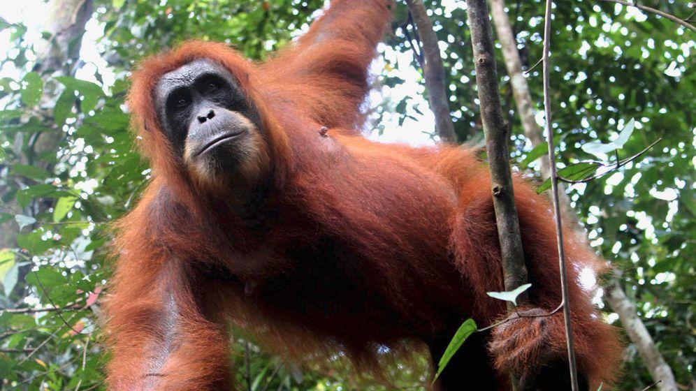 Torfsumpfwald Tripa: Brandrodung gefährdet Ökosystem