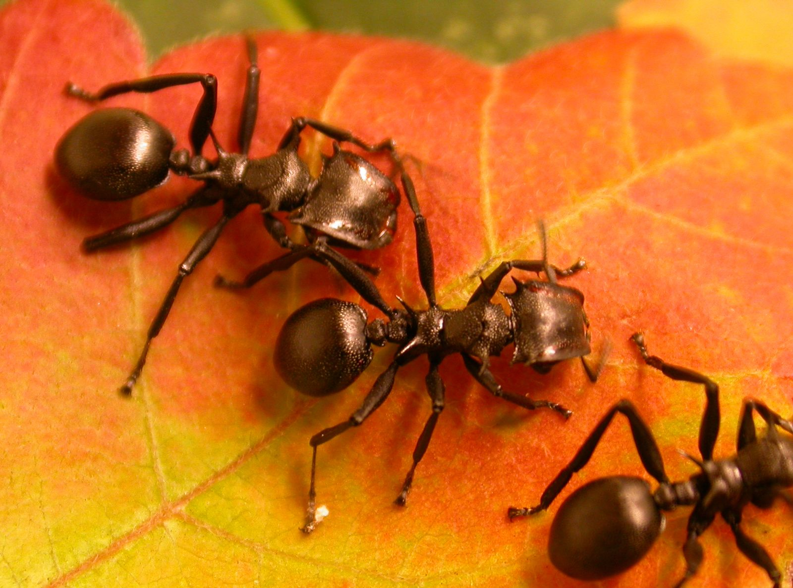 SPERRFRIST 12. NOVEMBER 21:00 UHR / Als Ameisen begannen Pflanzen zu lieben