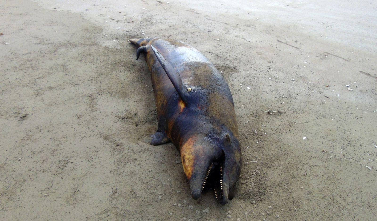 MEXICO-SEA-ANIMALS-DEATH