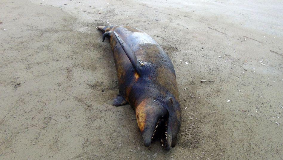 """Verendeter Delfin in Mexiko: """"Ungewöhnliches Vorkommnis"""""""