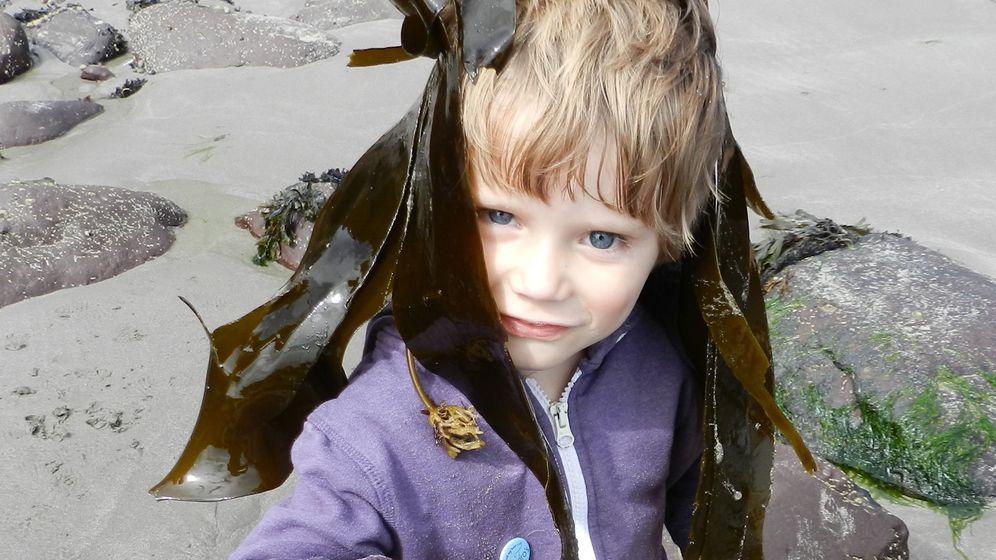Küste von Wales: Seafood zum Selbersammeln