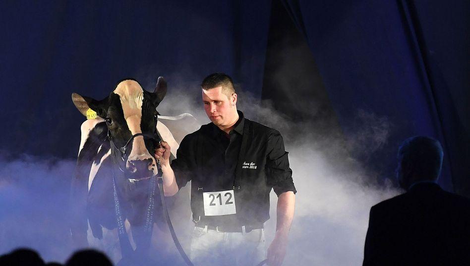 Trauer um Kuh Lady Gaga (hier im Jahr 2018 mit Besitzer Henrik Wille)