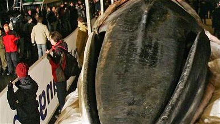 Wal-Bergung: Toter Meeressäuger macht Ärger