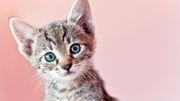 Kann mich meine Katze anstecken?