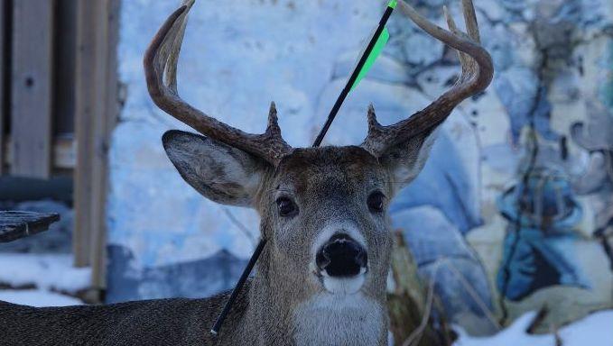 Foto von der Facebook-Seite »Carrot, the Magic Deer«