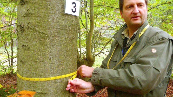 Buche, Lärche, Kiefer: Wie viele Bäume wachsen in deutschen Wäldern?