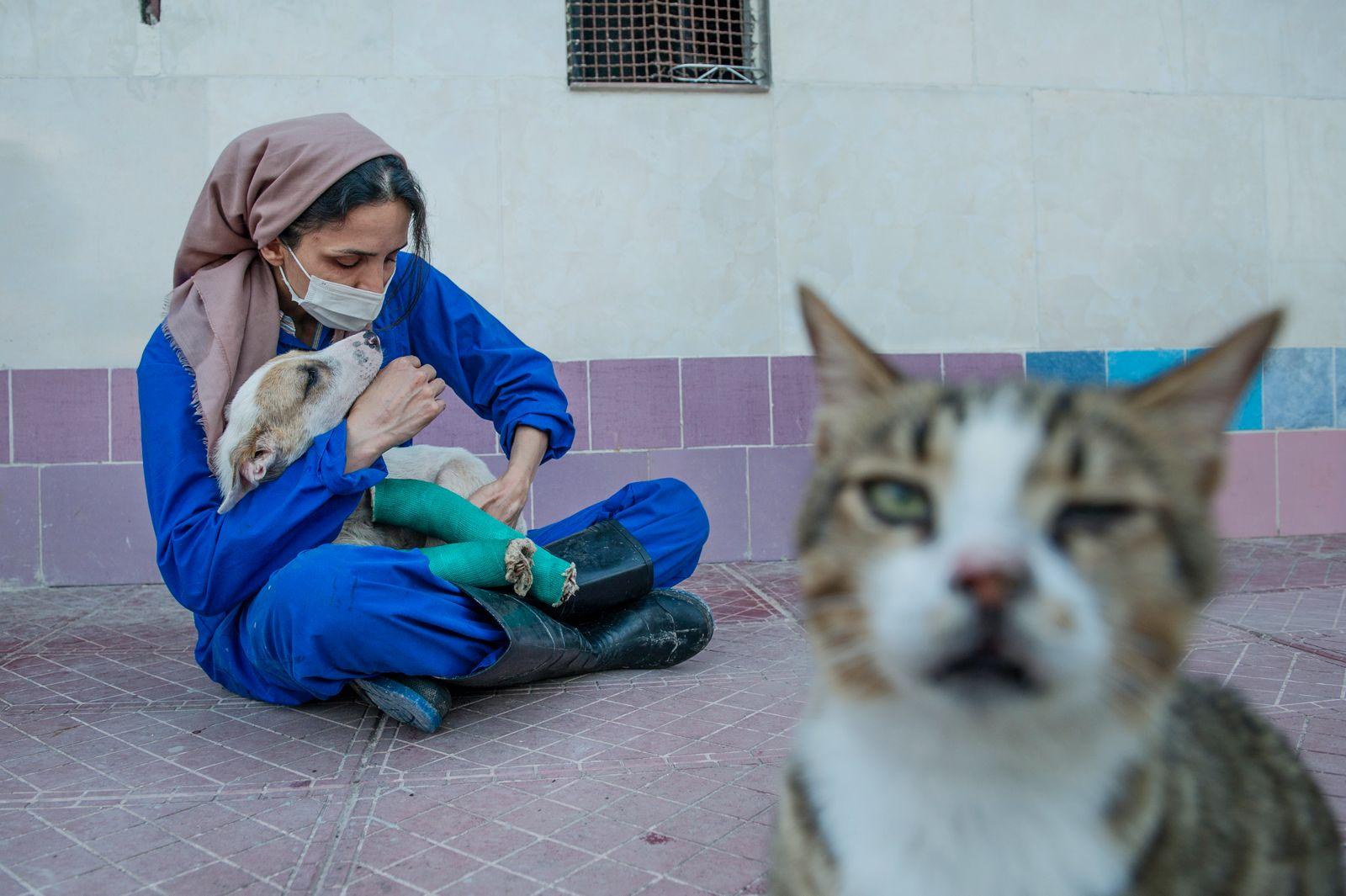 Azadeh, The Animal Shelter Owner