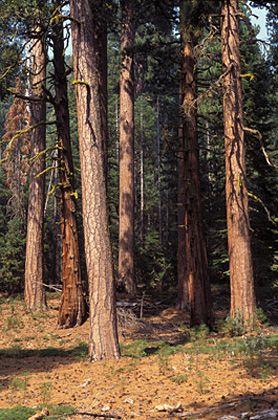 Schäden im Eldorado National Forest (Kalifornien): Verlängerte Sommerdürre