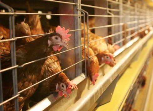 Seit dem Urteil des Bundesverfassungsgerichts zur Hennenhaltungsverordnung gilt: Die gesetzlichen Ermächtigungsgrundlagen müssen vollständig zitiert sein
