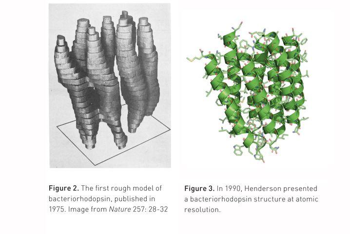 Bacteriorhodopsin: Strukturmodelle von 1975 (links) und 1990 (rechts)