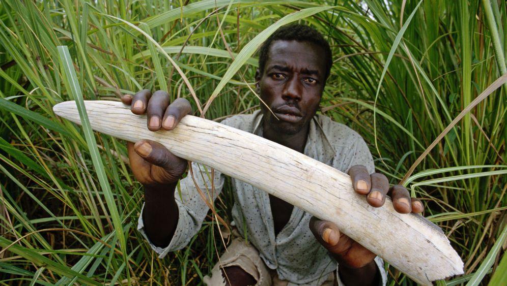 Kony auf der Flucht: Gemetzel im Schutzgebiet