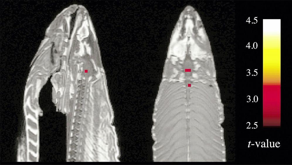 Kernspintomografie: Bilderflut aus den Tomographen