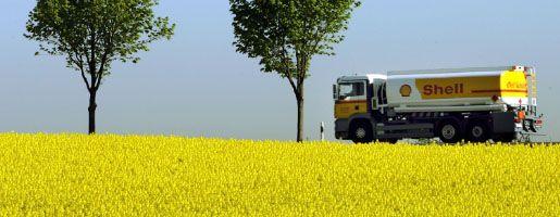 Rapsfeld: Biosprit wesentliche Ursache für Preissteigerungen