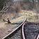 Deutsche Bahn bringt 20 stillgelegte Strecken wieder in Schuss