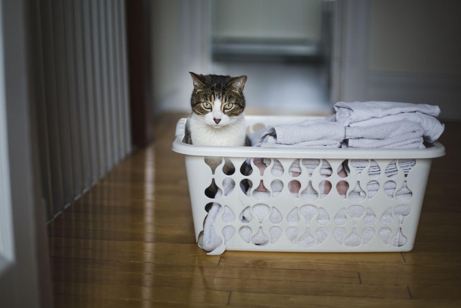 EINMALIGE VERWENDUNG Wäschekorb Katze