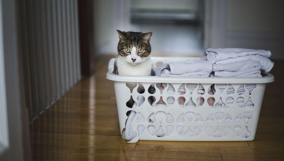 Trockene Wäsche (Symbolfoto)