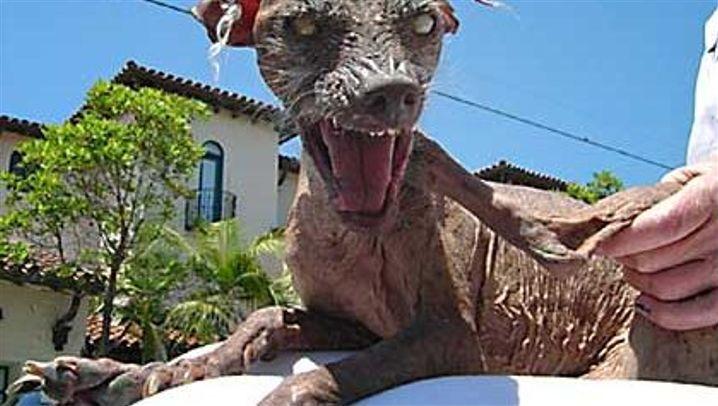Hässliche Tiere: Das Anti-Kindchen-Schema