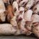 750.000 Tiere stehen im Schweinestau