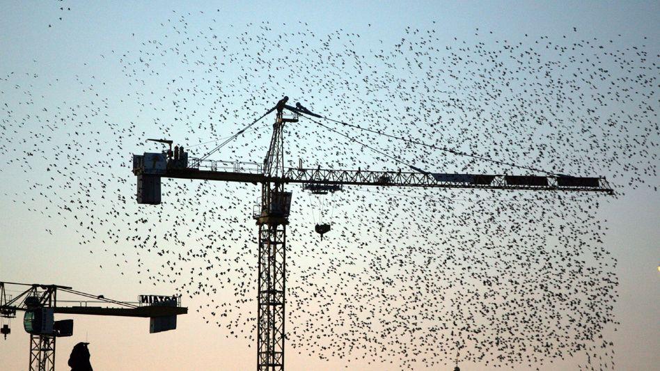 Zugvögel umfliegen einen Baukran: hohe Bauwerke und Lichter irritieren die Tiere