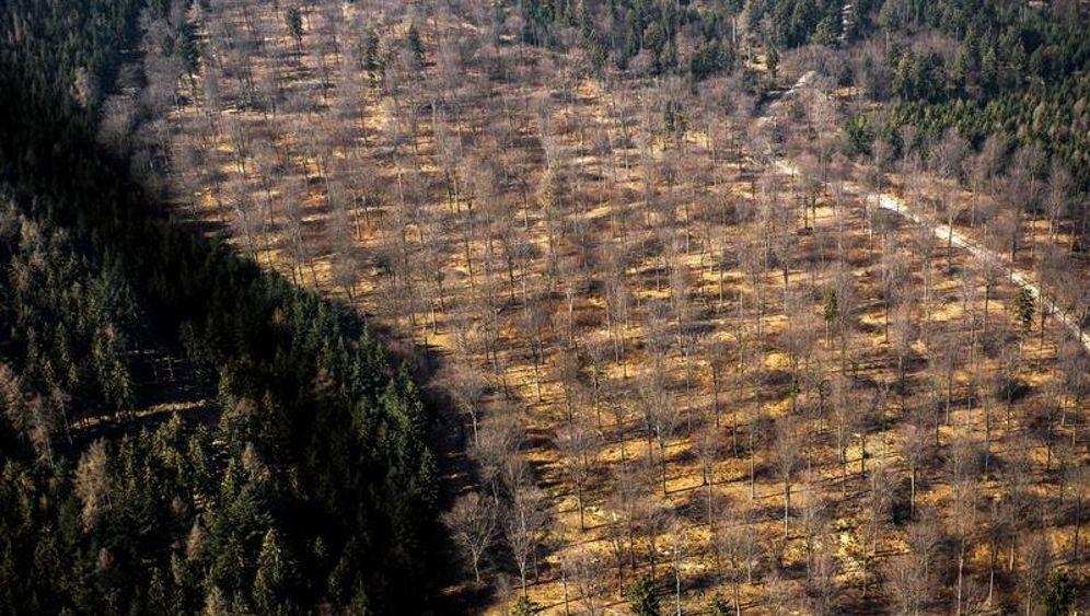Buchenwälder in Bayern: Bilder der Zerstörung