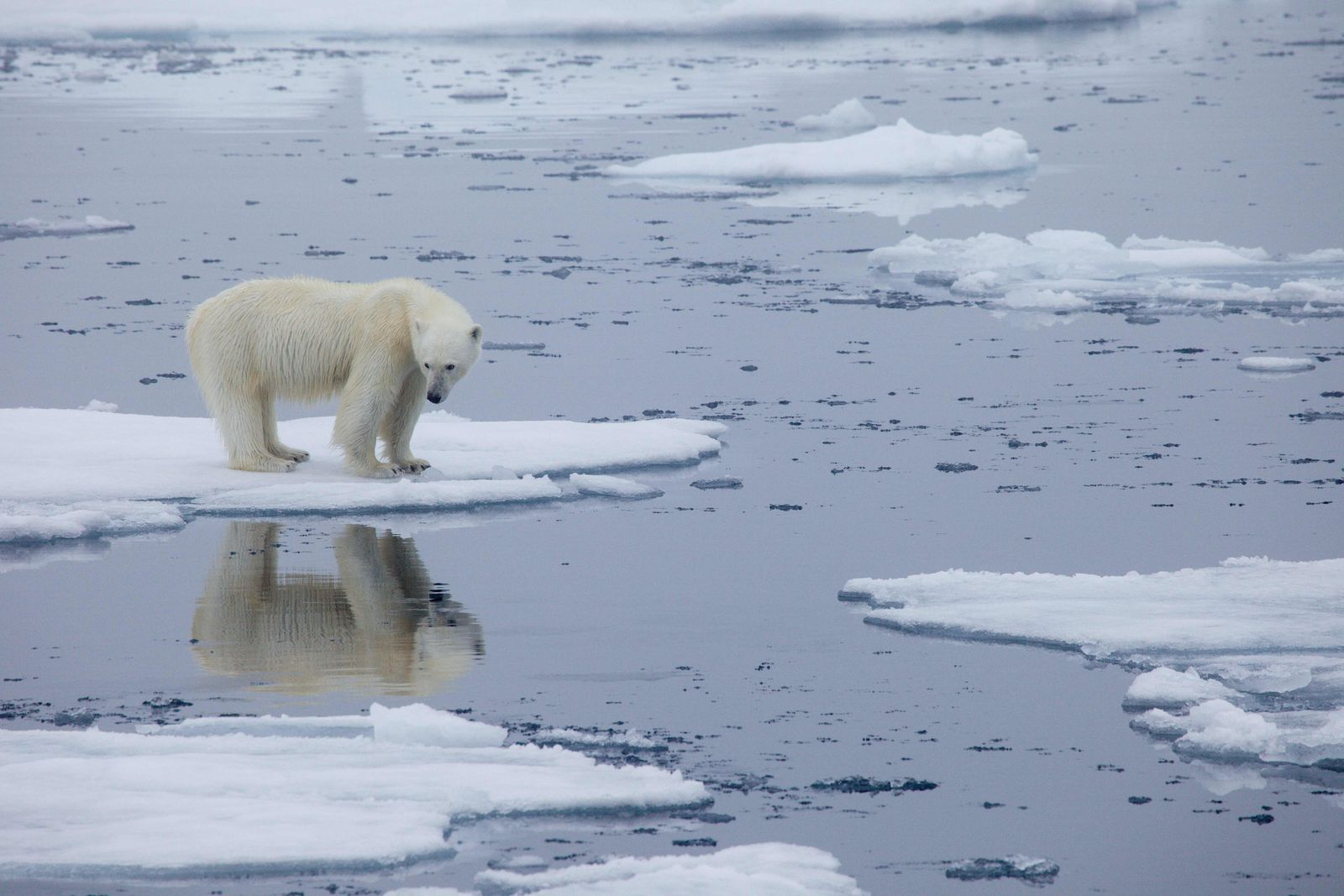 NORWAY-ENVIRONMENT-CLIMATE-WILDLIFE-POLAR-BEAR
