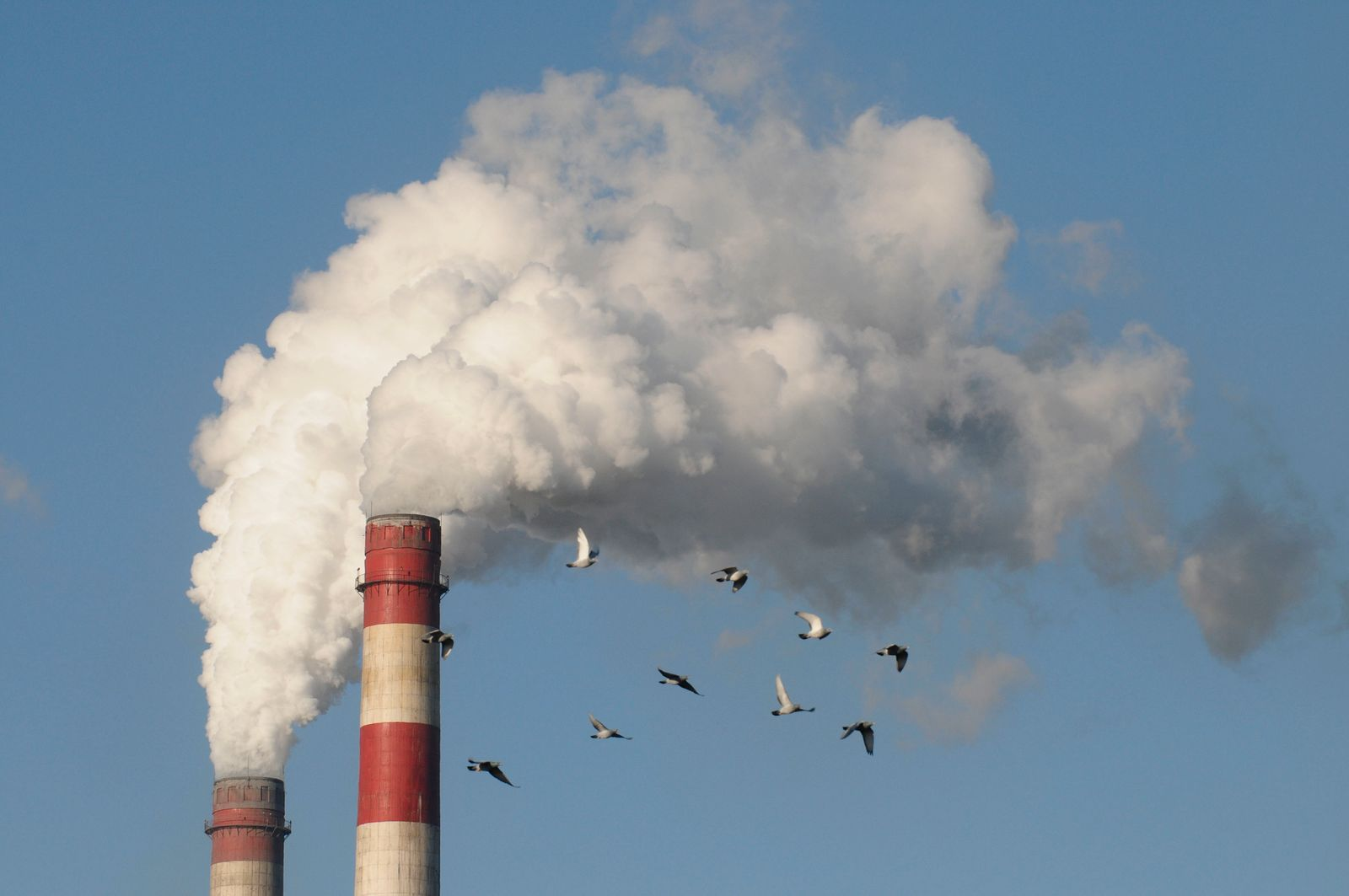 Pigeons fly near spewing stacks of a heat power plant in Changzhi, Shanxi province