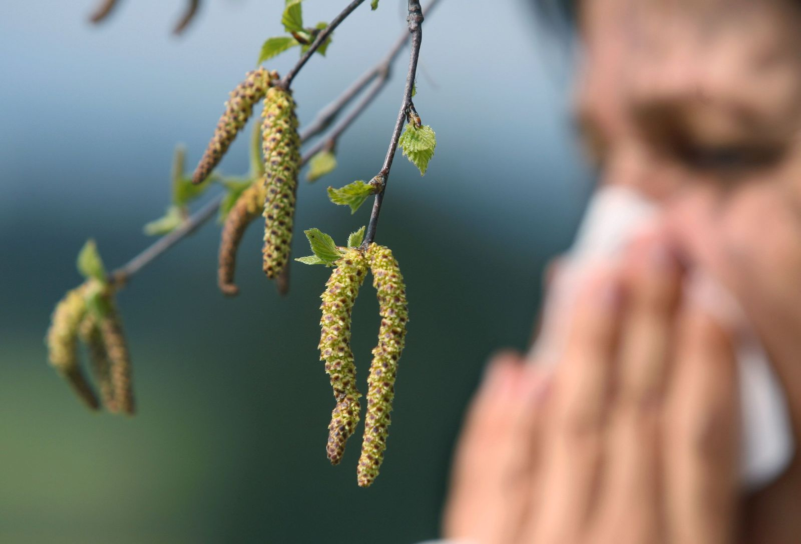 Pollenflug Birke / Allergie