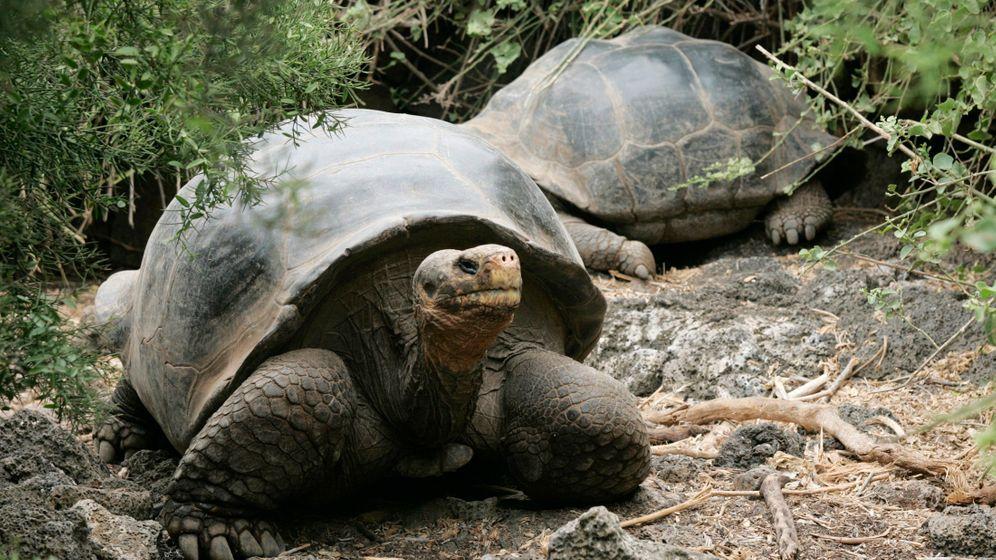 Rettung in der Not: Tausende Schildkröten geschlüpft