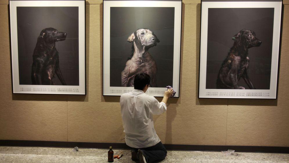 Projekt in Taiwan: Mann fotografiert Hunde vor Einschläferung
