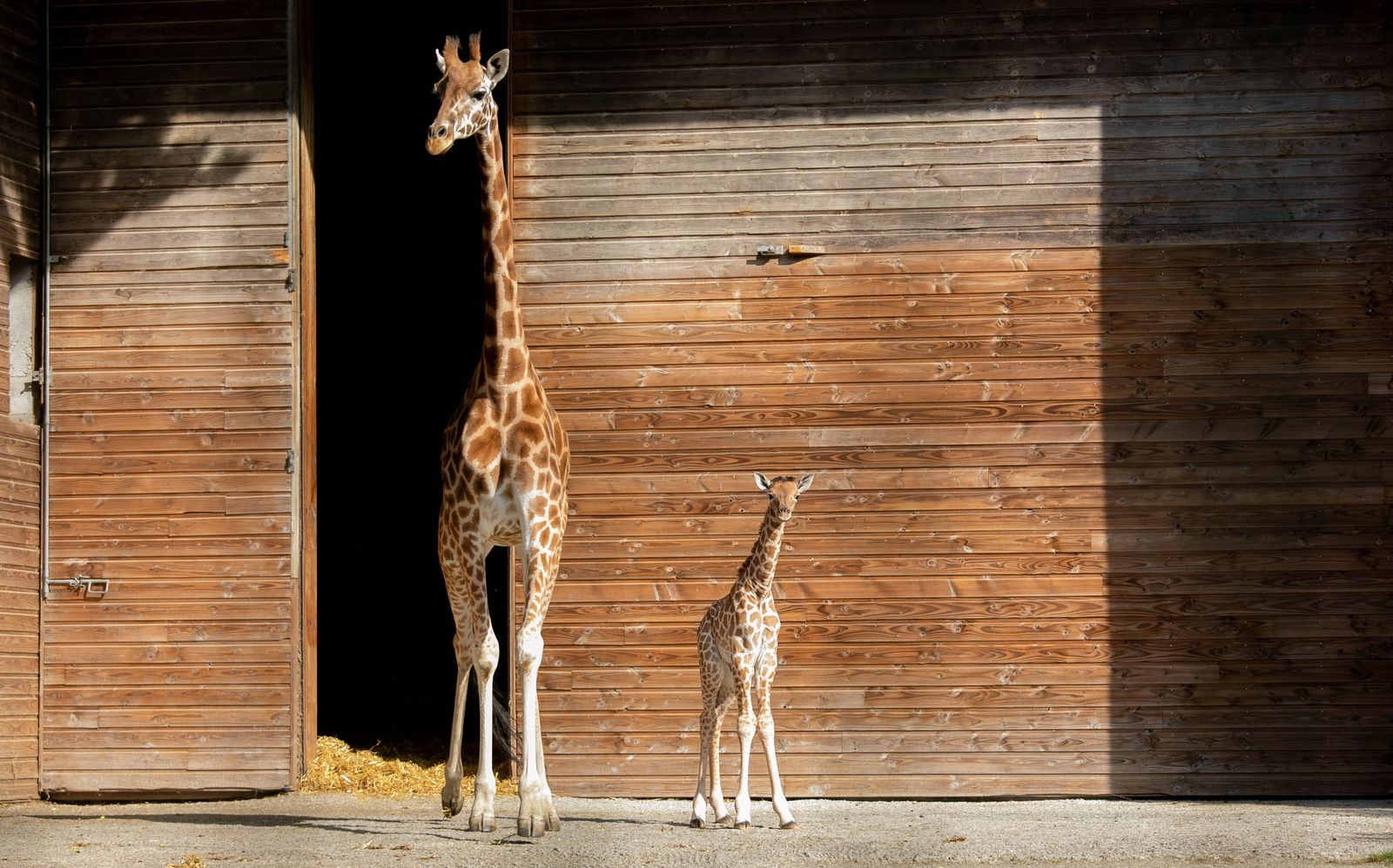 FRANCE-ANIMAL-CONSERVATION-ZOO