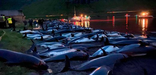 Färöer-Inseln: Entsetzen über grausame Delfin-Jagd