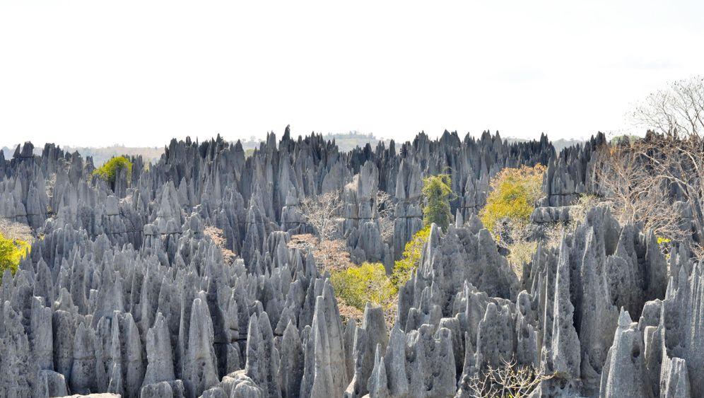 Tsingys de Bemaraha: Im Kalksteinnadelwald von Madagaskar