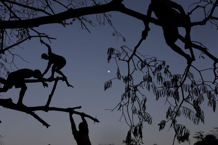 Tembé-Kinder toben in einem Baum - die Waldzerstörung bedroht ihre Zukunft