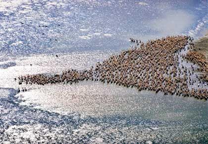 Pelikan-Kolonie im Donau-Delta: Verbindungskanal mitten durch eine Naturlandschaft