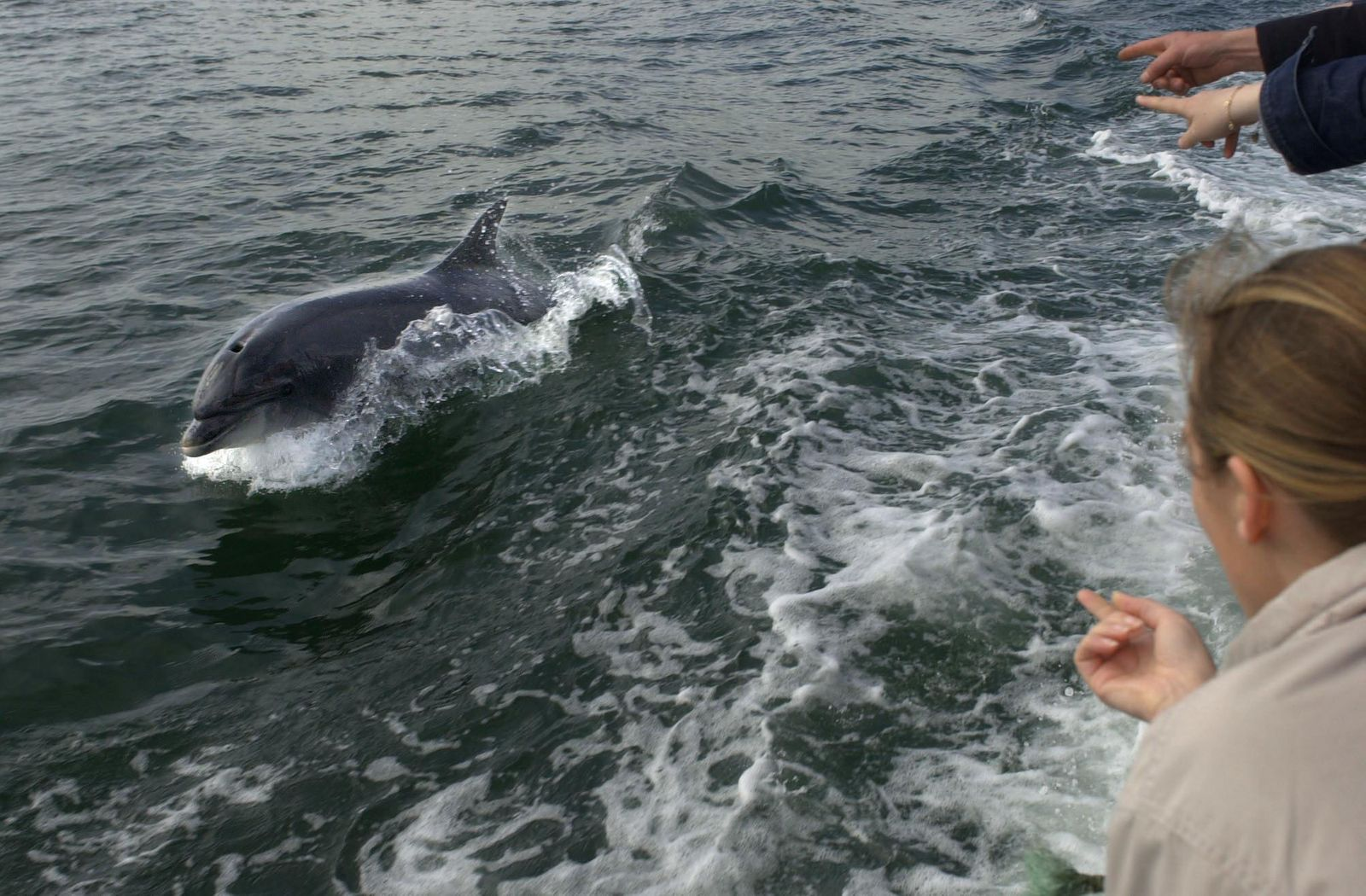 Delfin «Fungie» ist weg