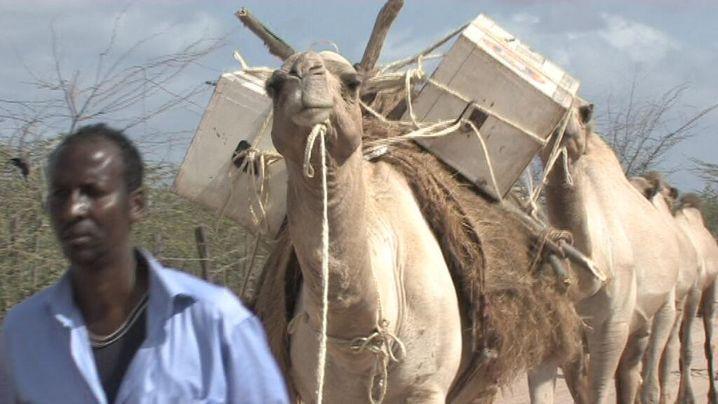 "Kenias mobile Kamelbibliothek: ""Lesen ist Wissen"""