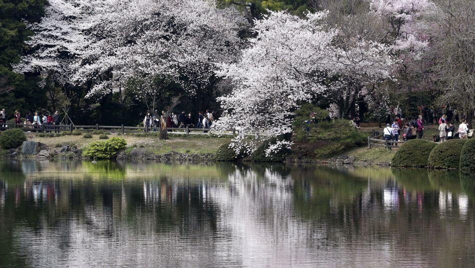 Shinjuku-Gyoen-Garten in Tokio