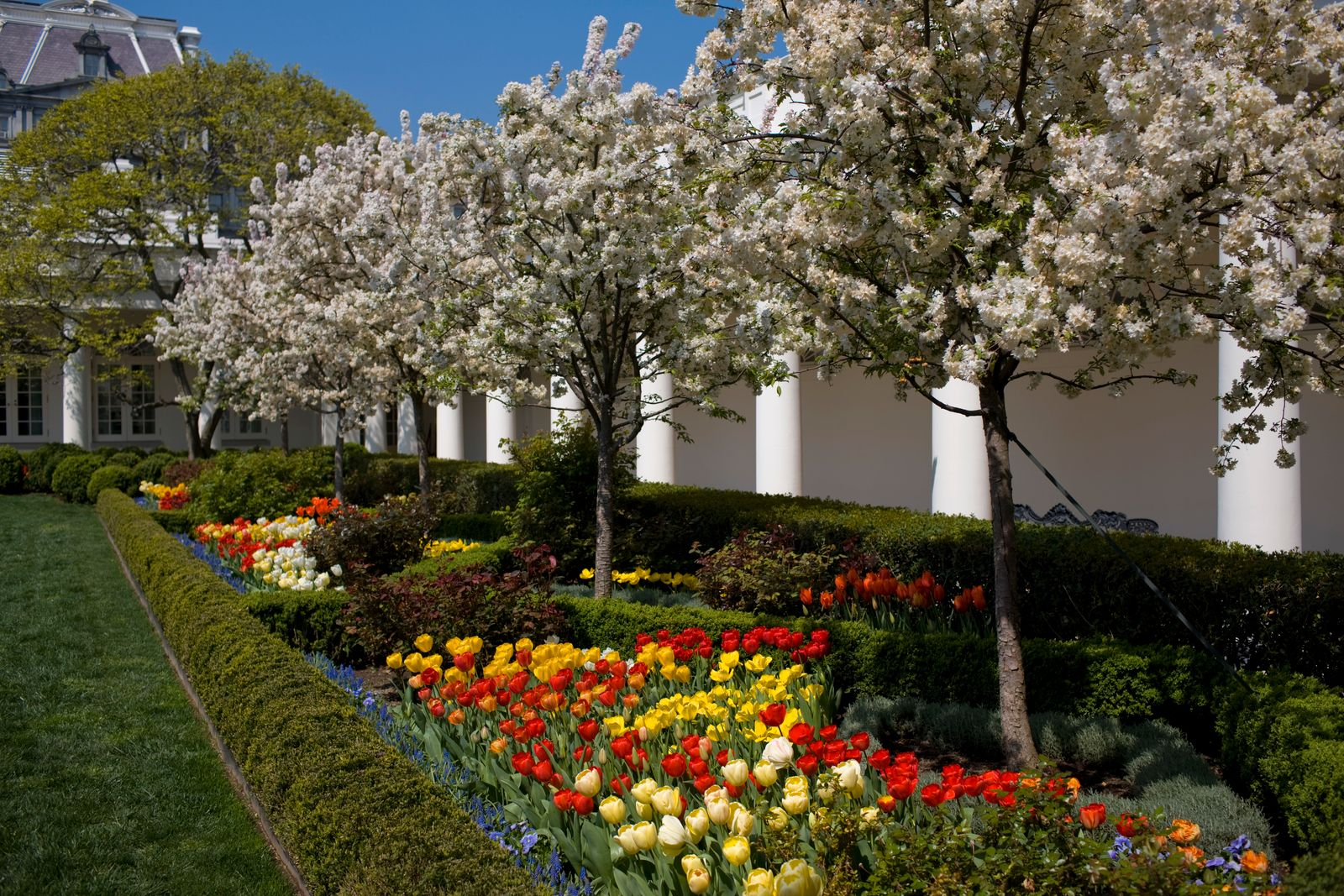 USA - White House - Rose Garden with Flowers in Bloom