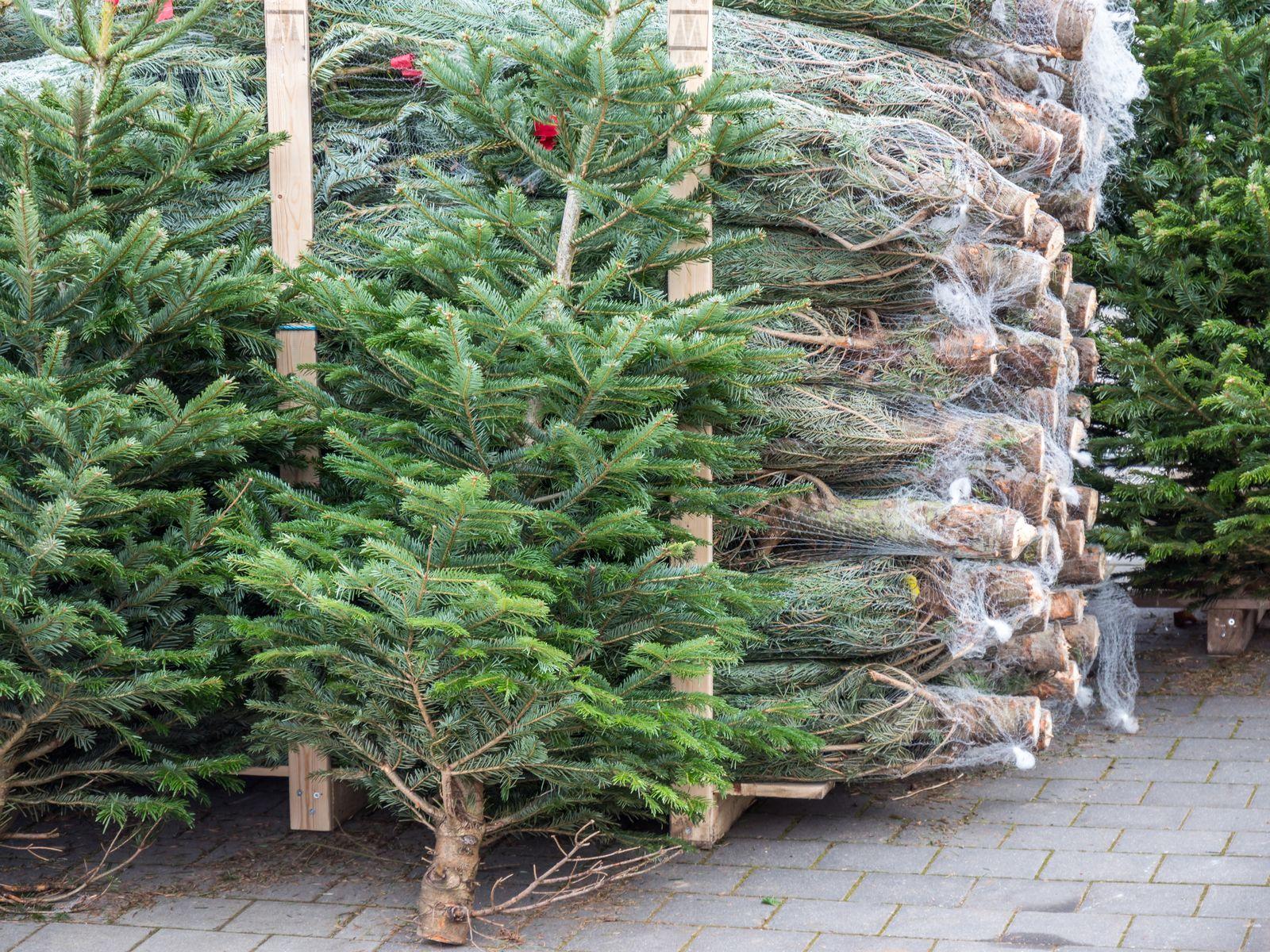 EINMALIGE VERWENDUNG Weihnachtsbäume/ Verkauf
