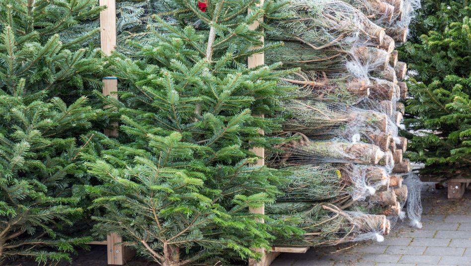Christbaumverkauf: Die Tannen wachsen in Plantagen, werden gedüngt und gespritzt