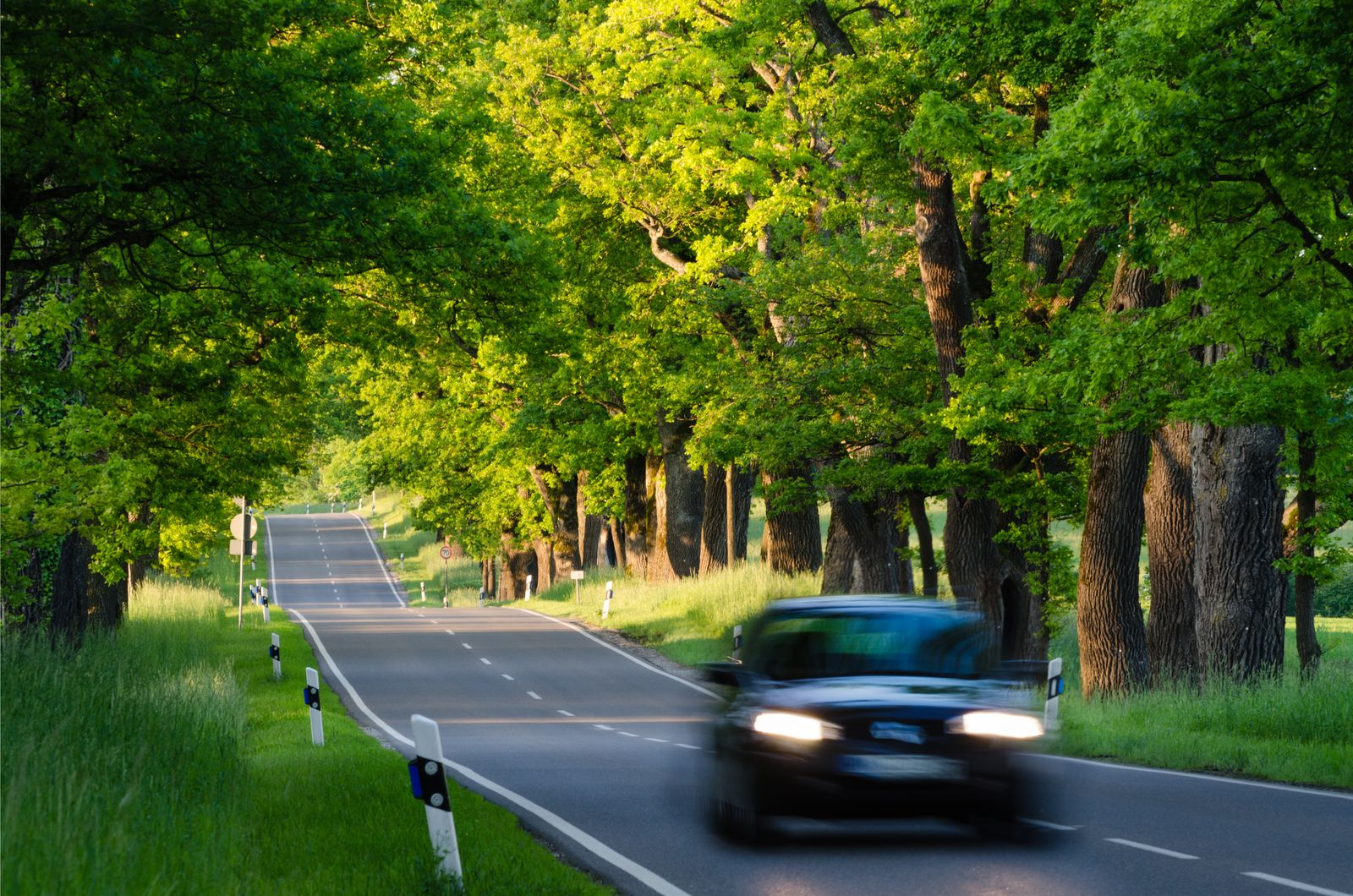 Black car on Country Road with Oak Trees
