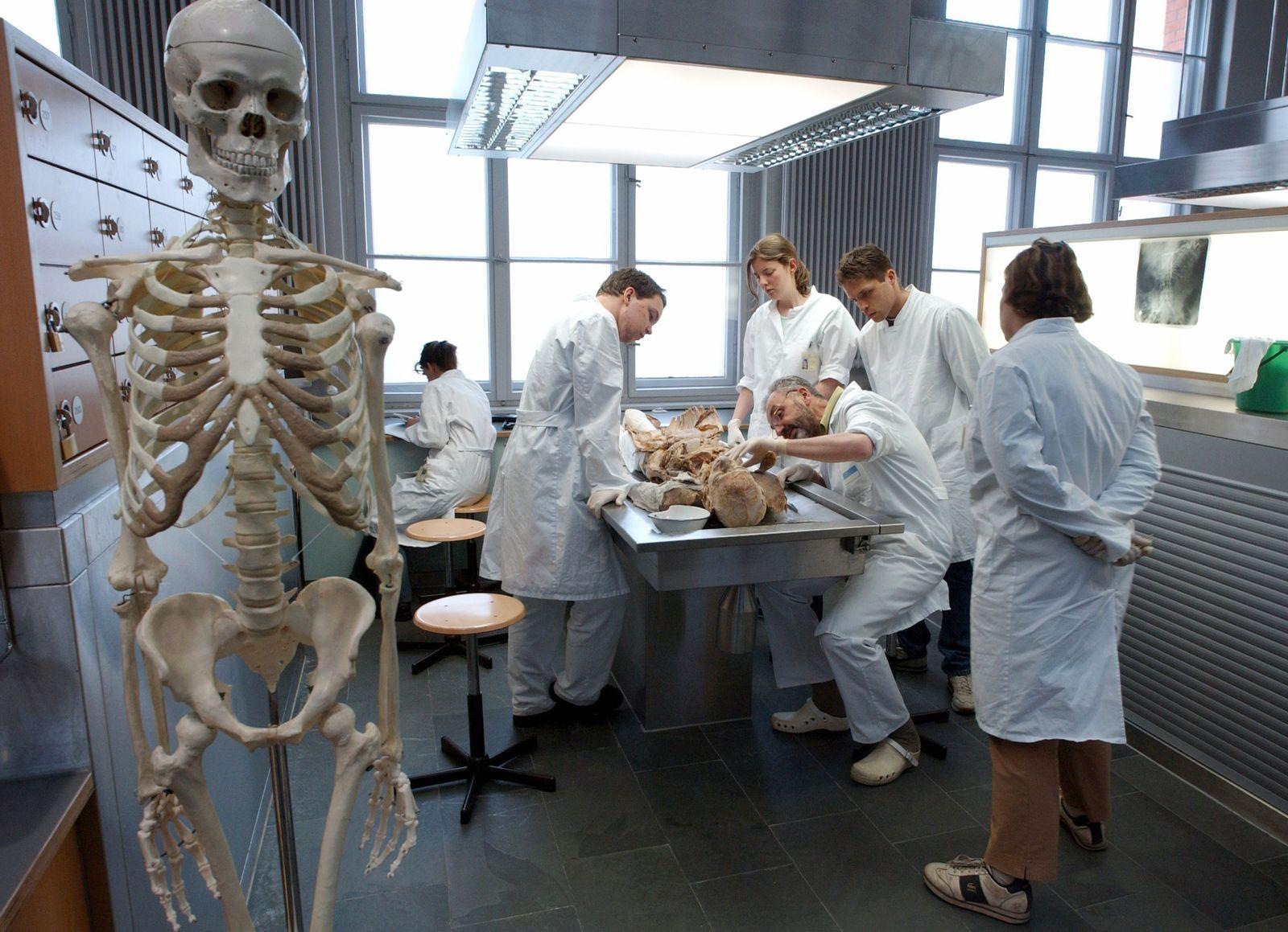 Medizinistudenten / Anatomie