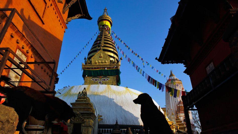 """""""Affentempel"""" in Kathmandu: Viele Sehenswürdigkeiten wurden zerstört"""
